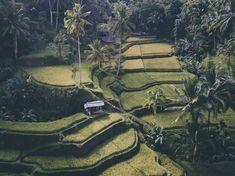 Praktische Tipps für eine Bali-Reise - Josie Loves