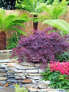 A bamboo fence, Japanese maple and pond create a relaxing garden scene with Asian flair. Tropical palm trees add vibrant color and height to the space.