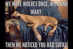 We were wolves once…