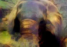 Items similar to Elephant in the Kruger, Wall Art Print, Printable Art, Wildlife Photography, Home Decor on Etsy Kruger National Park, National Parks, Herd Of Elephants, Three Days, Surreal Art, Printable Art, Surrealism, Creatures, Wall Art