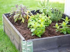 Tips för att odla i pallkrage Farm, Plants, Nature, Growing Gardens, Flowers, Little Garden, Garden