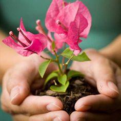 Hands of nurturing