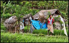 Bali Photo of the Day ~ Bad-Ass Rice Farmer ~ Yoga Retreat http://balifloatingleaf.com/rice-farmer-yoga-retreat/