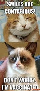 images of grumpy cat - Bing Images