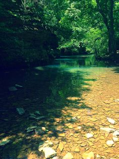 Bell Smith Springs Shawnee National Forest