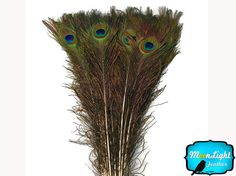 USA Wholesale Feathers 100 Pieces 45-50 by MoonlightFeatherInc