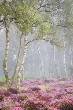 Heathland (England) by Verity Milligan on 500px