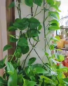 Inside Plants, Ivy Plants, Garden Plants, Balcony Garden, Plants On Walls, Wall Herb Garden Indoor, Garden Terrarium, Fake Plants, House Plants Decor