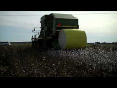FIAR-The Rag Coat-great video on how cotton is picked!