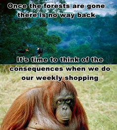 Check ingredient labels for Palm Oil. Do Not Buy it. Please.