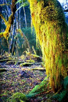 old barn with moss image - Google Search