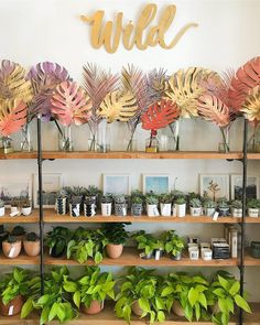 Wildflora - wildfloradesign.com -  Los Angeles florist, Ventura Blvd Studio City, California, flower  delivery, wedding bouquet, event & special occasion floral arrangement. Gift  shop, garden store, foliage painted monstera leaves white brick wall giant bold colorful pink purple wild wood shelves succulents mugs golden pothos coral planters pots terracotta