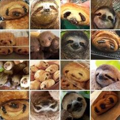 Sloth or pain au chocolat? (Does it matter when it's all this adorable? Funny Animal Memes, Funny Animal Pictures, Funny Animals, Cute Animals, Funny Memes, Sloth Memes, Random Pictures, Sloth Humor, Funniest Memes