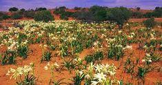 the simpson desert australia - Google Search