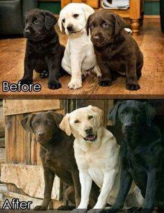 こんなに変わった!動物たちの赤ちゃん時代と今を比較した写真いろいろ:らばQ