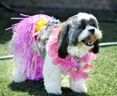 First, you must decide if you want a theme. Luau? | Dogs Present 19 Tips For The Perfect Summer BBQ