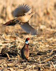 406e173f64f8f 17 Best Pheasants Forever images | Centerpiece ideas, Decorating ...