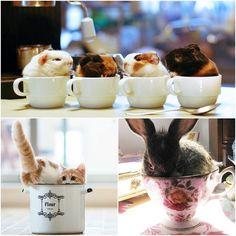 Cute and fun access in cups
