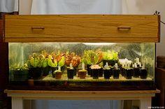 The Carnivorous Plant Terrarium -a builder's guide-