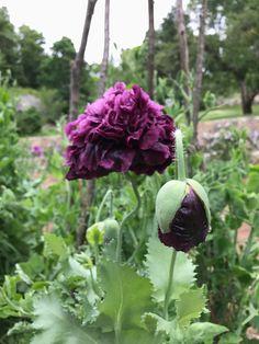 Lindsey Taylor gardens