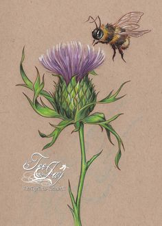 Thistle and Bee 🐝 Watercolor Flowers, Watercolor Art, Scottish Thistle Tattoo, Bee Drawing, Thistle Flower, 1 Tattoo, Bee Art, Celtic Tattoos, Botanical Prints