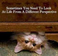 Positive cute quotes sayings perspective - Collection Of Inspiring Quotes, Sayings, Images Kittens Cutest, Cats And Kittens, Cute Cats, Funny Cats, Funny Animals, Cute Animals, It's Funny, Funny Humor, Funny Cat Videos