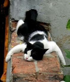 Just having a cat nap