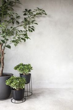 Indoor Garden Styling /