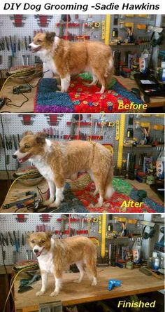 Sadie was such a good sport letting me try my hand at DIY dog grooming. It's not perfect but after the cut, bath and brushing she feels better and we saved a little money. Good Doggy :)    Feel free to use this image in good taste for your website or blog, just include image credit with a clickable do-follow link back to http://hotblogtips.com/