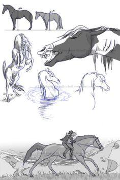 Pibald mare/Puck Sean sketches