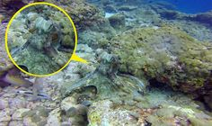 Image result for octopus camouflage Octopus Illustration, Camouflage, Painting, Image, Art, Identity, Art Background, Military Camouflage, Painting Art