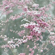 Fleur ∙ Flower ∙ Flor: July 2012