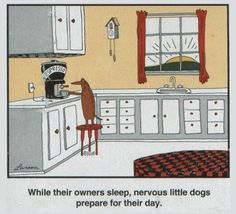 While their owners sleep, nervous little dogs prepare for their day.