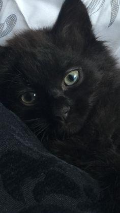 Beautiful Black Kitten Fluffy Black Cat Black Cat Aesthetic Cats