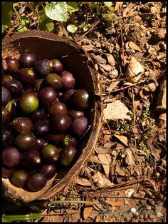 rare zara berry, indian berry