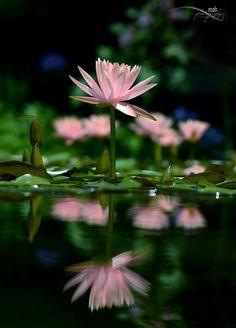 silvaris: ~Reflected Living~ by Mohan Duwal