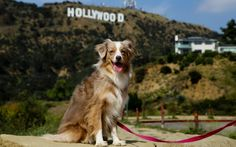 Here are the best activities to do with your dog in the Los Angeles area.