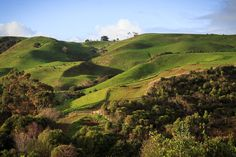 Raglan country Raglan New Zealand, Fresh Image, Happy Weekend, Golf Courses, Surfing, River, Country, Photography, Outdoor