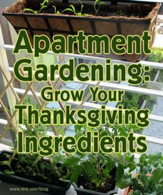 Learn how to grow your own ingredients for Thanksgiving dinner in an apartment garden!  #Thanksgiving #garden #gardening #apartment #renting #greenliving