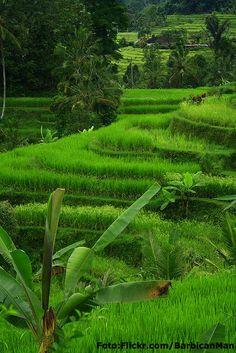 Subak,irrigation system.at Jatiluwih, Tabanan - Bali