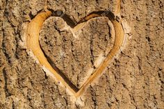 Heart In Nature, Photo Heart, Love Symbols, Carving, Stock Photos, Texture, Design, Memories, Surface Finish