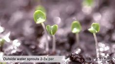 How to Grow Your Own Sprouts at Home