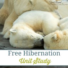 Check out this free hibernation unity study that Selena is sharing today at Year Round Homeschooling. Kindergarten Science, Preschool Curriculum, Classroom Activities, Homeschool, Science Ideas, Science Lessons, Hibernating Animals, Animals That Hibernate, Free Worksheets For Kids