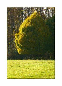 'Herbstleuchten pp' von Rudolf Büttner bei artflakes.com als Poster oder Kunstdruck $18.71