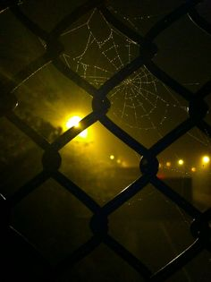 Midnight mist caught in a spiderweb - The 365,000 Words of a Year