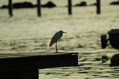 Um passaro contemplando o mar