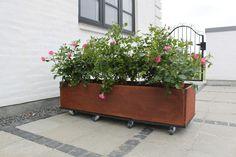 Plantekasse med hjul i rustent jern og roser aflang