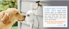 Gotta get this for Duchess! No more begging me to turn on the bidet for her to drink out of.     Pet Drinking Water Fountain, Dog Water Dish - Automatic Outdoor —