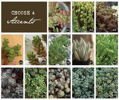 DIY Succulent Mini Garden Seashells, Sea Shell Terrarium, Succulent Plants, Custom Choice Succulent Cuttings