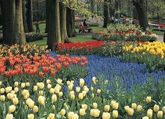 Tulips and Windmills of Holland and Belgium